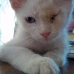 Foto: Dialéctica Fernández. Gema es una gatita que busca hogar.